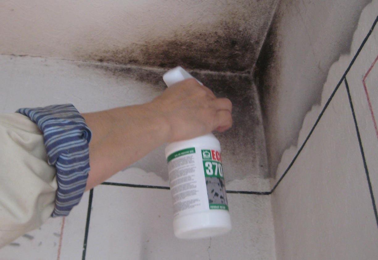 Как вывести плесень на стенах 36