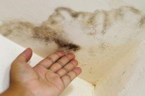 Появление грибка на потолке
