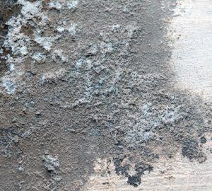 Как убрать плесень с потолка в домашних условиях?